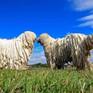 """Những cách thể hiện """"tình thân mến thương"""" của các loài động vật"""