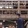 Bộ Nông nghiệp và Phát triển nông thôn kiểm tra công tác phòng chống tả lợn châu Phi