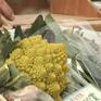 Nhật Bản cho phép  lưu thông thực phẩm biến đổi gen