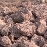 Thời tiết khắc nghiệt, hàng nghìn ha nuôi tôm ở ĐBSCL bị đe dọa