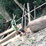 Cách chức Trạm trưởng Trạm bảo vệ rừng Trường Sơn