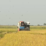 Từ tư duy nông nghiệp đến tư duy kinh tế nông nghiệp