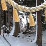 Đường dây nóng ngăn chặn tự tử tại Nhật Bản