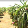 Thúc đẩy việc đăng ký mã số vùng trồng, cơ sở đóng gói