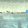 Sông Tô Lịch giảm mùi hôi sau 3 ngày thử nghiệm công nghệ Nhật Bản
