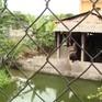 Làng xóm bất hòa vì xưởng rèn giữa khu dân cư