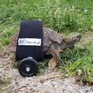Sáng tạo xe lăn cho rùa bị liệt