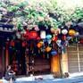 Hội An rực rỡ với trăm hoa khoe sắc ngày hè