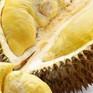 Tác dụng tốt cho sức khỏe từ quả sầu riêng