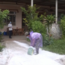 Nguy cơ bùng phát dịch tả lợn châu Phi ở vùng cao Quảng Trị do giấu dịch