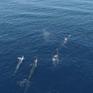 Cảnh báo số lượng sinh vật biển giảm mạnh