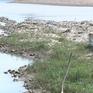 Hàng nghìn ha lúa ở Quảng Bình, Nghệ An bị khô hạn