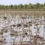 Chuyển đổi cơ cấu cây trồng thích ứng biến đổi khí hậu