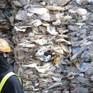 Đông Nam Á tìm cách trả lại rác cho các nước phát triển
