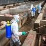 Giá thịt lợn tại Trung Quốc có thể tăng đến 70%