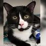 Mèo sống sót sau khi bị quay trong máy giặt 30 phút