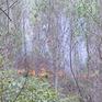 Điều động hàng trăm cán bộ, chiến sỹ chữa cháy rừng thông tại TT-Huế