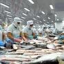 Giá cá tra giảm mạnh và khó tiêu thụ