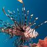 Đảo Síp tuyên chiến với cá ngoại lai