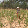 Thái Lan triển khai hàng loạt biện pháp ứng phó với hạn hán