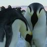 Đức: Cặp chim cánh cụt đồng tính chuẩn bị làm cha mẹ