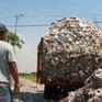 Nông dân Indonesia mưu sinh từ rác