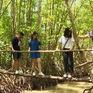 Khám phá rừng đước Năm Căn, Cà Mau