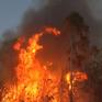 Nhiều lỗ hổng trong quản lý rừng kinh tế