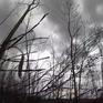 Tràn lan cháy rừng: Lỗ hổng quản lý từ đâu?