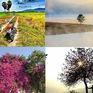 """Những cây xanh vô tình trở thành điểm """"sống ảo"""" khiến giới trẻ mê mệt"""