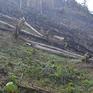 Bắt tạm giam 3 chủ rừng chặt phá rừng trái phép tại Nghệ An
