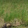 Mực nước lũ thấp, nông dân An Giang lo cho vụ lúa sau