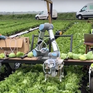 Robot thay thế lao động nông nghiệp tại Mỹ