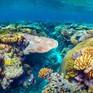 Australia nỗ lực cứu rạn san hô Great Barrier