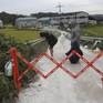 Hàn Quốc nỗ lực bình ổn giá thịt lợn