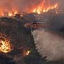 Quan ngại về nguồn nước tại Australia do cháy rừng