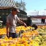 Bến Tre: Người trồng hoa lo thiếu nước tưới cho hoa