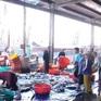 Sáng cuối năm ở cảng cá Hòn Rớ, Khánh Hòa