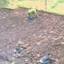 Khẩn trương khắc phục hậu quả mưa đá, ổn định cuộc sống người dân