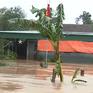 Nước lũ vẫn đang ở mức đỉnh tại Hà Tĩnh
