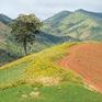 Quyến rũ mùa hoa dã quỳ trên núi lửa Chư Đăng Ya