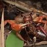 Thế giới kỳ ảo của côn trùng