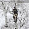Chàng trai trèo cây cao 8m tìm bắt sóng di động để học trực tuyến