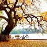 [INFOGRAPHIC] Du lịch Việt Nam giành nhiều hạng mục giải thưởng quan trọng