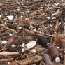 Bãi biển Nha Trang ngập rác sau lụt