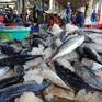 Trao cơ hội từ Hiệp định EVFTA đến ngư dân