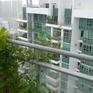 Tương lai nông nghiệp của Singapore bắt đầu từ những khu vườn nhỏ