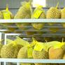 Chung tay hỗ trợ tiêu thụ nông sản do ảnh hưởng COVID-19