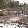 """""""Nóng"""" tình trạng cưa cây lấy gỗ, phá rừng làm rẫy ở Khánh Hòa"""