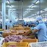 Ảnh hưởng xuất khẩu, giá cá tra giảm gần một nửa
